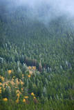 Frosty Evergreens on a Foggy Hill in Rocky Mountains, Colorado Photographic Print by Anna Miller