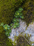 Hetch Hetchy Valley Moss and Ferns Photographic Print by Anna Miller