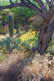 Plantlife of Arizona Desert,USA Photographic Print by Anna Miller