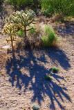 Teddybear Cholla Cactus, Arizona,USA Photographic Print by Anna Miller