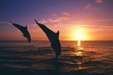 Dolphins Photographic Print