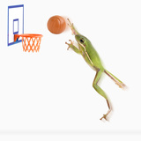 Frog Playing Basketball Photographic Print