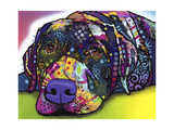 Savvy Labrador Giclee Print by Dean Russo