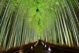 The Bamboo Forest of Kyoto, Japan. Photographic Print by  SeanPavonePhoto