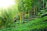 Tea Plantation with Bamboo Forest Photographic Print by Liang Zhang