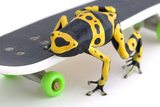 Frog on a Skateboard Photographic Print