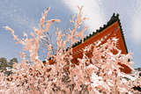 Kyoto, JAPAN - APRIL 19Th : Pink Paper Pray for Good Luck Tied on a Dry Twig in Heian Jingu Shrine, Posters by  elwynn
