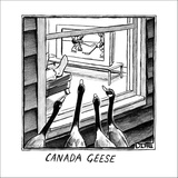 Geese watching hockey from a window.  - New Yorker Cartoon Stretched Canvas Print by Matthew Diffee