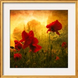 Red for Love Framed Photographic Print by Philippe Sainte-Laudy