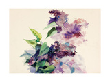 Purple Flowers Posters by Boyan Dimitrov