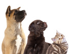 Cat and Dog, Group of Dogs and Kitten  Looking Up Poster by  Lilun