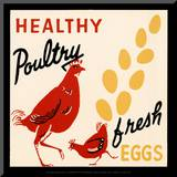 Healthy Poultry-Fresh Eggs Mounted Print