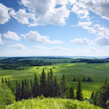 Green Rural Fields and Pine Trees. View from Top of a Hill. Prints by Dudarev Mikhail