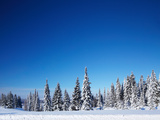Winter Forest with Pine Trees and Snowy Field and Clear Blue Sky Posters by Dudarev Mikhail
