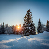Winter Snowy Pine Trees at Sunset Prints by Dudarev Mikhail