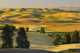 Farmland at Harvest Time Photographic Print by  JuneJ