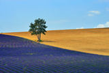 Lavender Field Prints by Oleg Znamenskiy