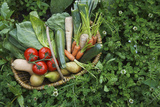 Closeup Elevated View of Fresh Vegetables in Basket Surrounded by Clover Photographic Print by  Nosnibor137