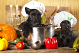 Scotch Terrier Kitchen Boy in a Saucepan, Cook Puppies Photographic Print by  Lilun