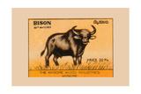 Bison Prints