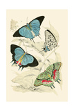 European Butterflies and Moths Posters by James Duncan