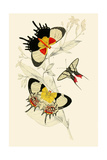 European Butterflies and Moths Print by James Duncan