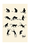 Cat Versus Frog Prints by Théophile Alexandre Steinlen