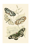 European Butterflies and Moths Poster by James Duncan