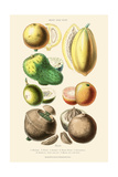 Fruits and Nuts. Mammee, Pawpaw, Soursop, Negro Peach, Granadilla, Brazil Nut, Zabucajo Poster by William Rhind