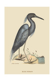 Blue Heron Prints by Mark Catesby
