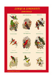 Lory and Lorikeet Composite Classroom Poster Prints by John Gould