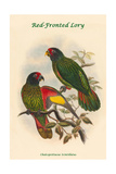 Chalcopsittacus Scintillatus - Red-Fronted Lory Posters by John Gould