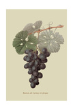 Raison De Carnes or Grape Prints by William Hooker