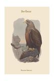 Haliates Albicilla - Sea-Eagle Poster by John Gould