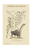 American Bison Posters by Mark Catesby