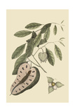 Blue Tail Lizard Posters by Mark Catesby