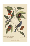 Blue Grosbeak Affiches par Mark Catesby