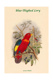Lorius Tibialis - Blue-Thighed Lory Posters by John Gould
