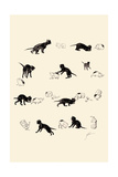 Cat and Guinea Pig Posters by Théophile Alexandre Steinlen