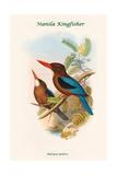 Halcyon Gularis - Manilla Kingfisher Poster by John Gould
