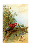 Parrot in a Tree Above Hummingbrds Stampe di A. Hochstein
