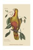 Parrot of Paradise of Cuba Stampa giclée premium di Catesby, Mark