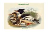 Mergus Serrator - Merganser Duck Posters by John Gould