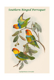 Cyclopsittacus Cervicalis - Southern Ringed Perroquet Poster by John Gould
