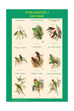 Parakeet Classroom Poster Vertical I Print by John Gould