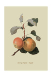 Kerry Pippin - Apple Posters by William Hooker