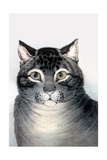 Favorite Cat Prints by  Currier & Ives