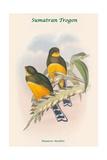 Harpactes Mackloti Poster by John Gould