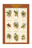 Parakeet Classroom Poster Vertical II Prints by John Gould