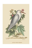 Little White Heron Prints by Mark Catesby